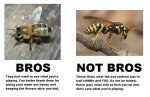 Bee Vs Wasp Advisory #3
