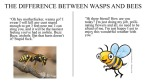 Bee Vs Wasp Advisory #2
